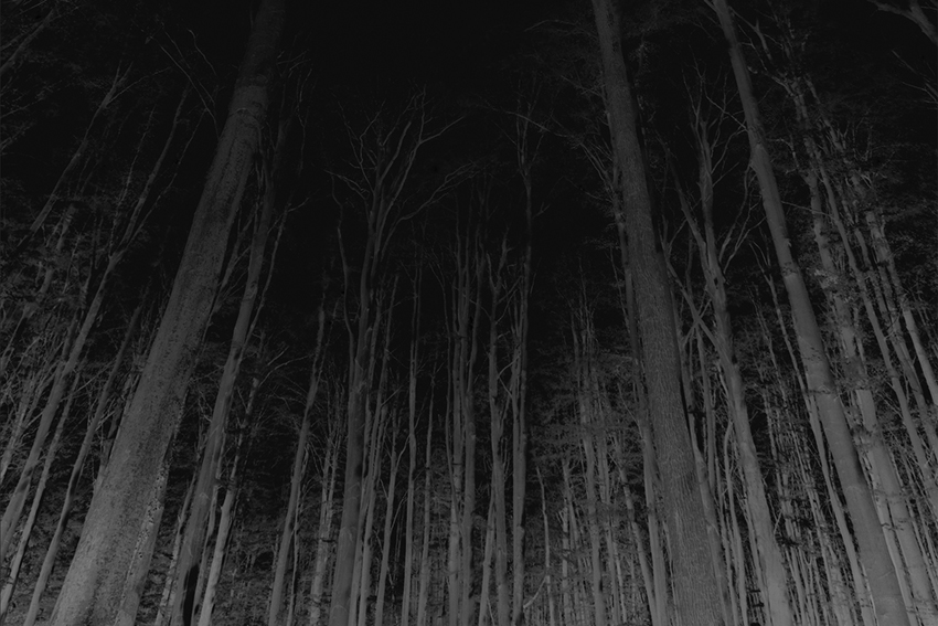 Reversed image of forest and trees
